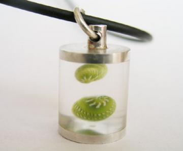 Pendant Silver & Emerald Nerites in resin chamber : $51